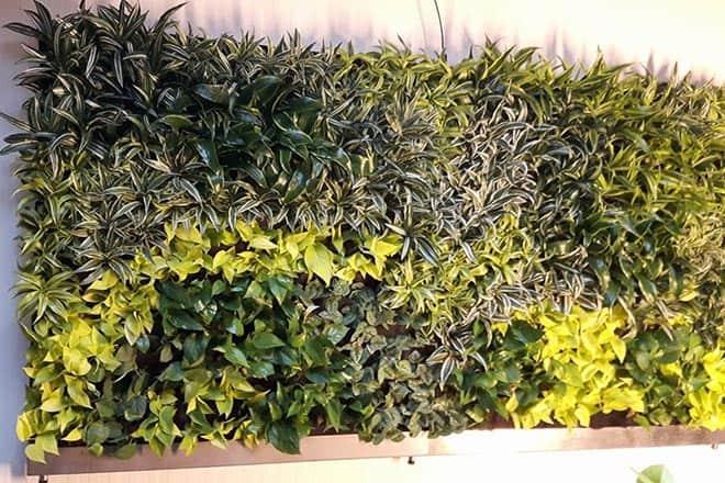 verticale tuin binnen is een plantenwand met een verscheidenheid aan planten