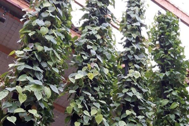 plantwire een hangende tuin voor thuis of op kantoor
