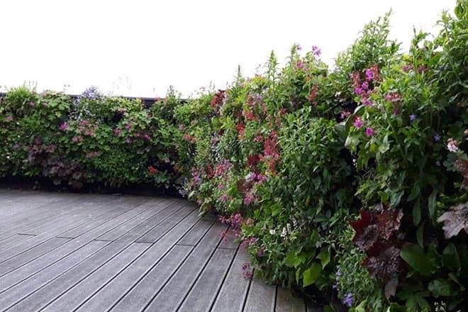 plantenwand dakterras