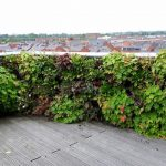 plantenwand outdoor geeft uw dakterras een natuurlijke uitstraling