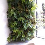 verticale tuin binnen een weelde van planten aan de muur