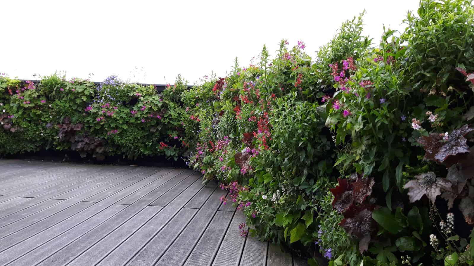 dakterras straalt met een verticale tuin vol in bloei
