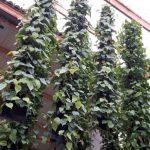 plantwire de groene wand een hangende tuin voor bij de entree