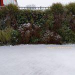 vertical garden outdoor met sneeuw
