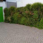 verticale tuin buiten zowel in de zomer als in de winter een groene aanblik