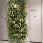 verticale tuin indoor een muur met planten in een bedrijf