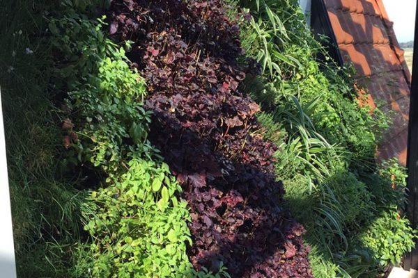 Bekijk de verticale kruidentuin met peterselie, pepermunt, oregano en bieslook
